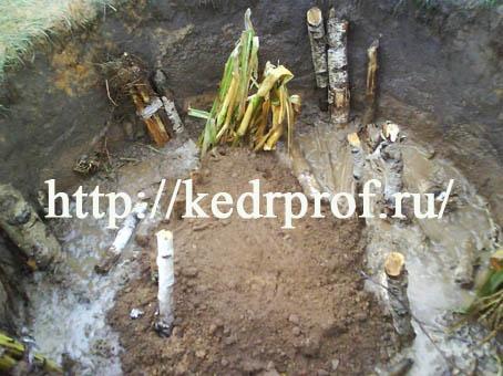 Посадочную яму заполните смесью верхнего плодородного слоя почвы с компостом
