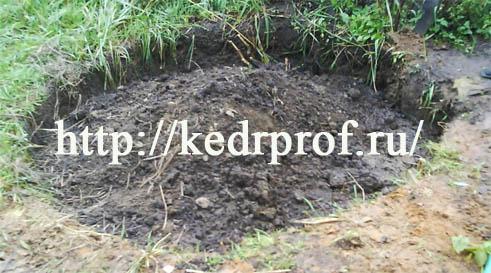 Верхнюю часть посадочной ямы заполните плодородной супесью и сформируйте пологий конус почвы